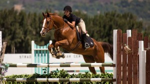 Santa Clarita Hunters Jumpers Equitation Horse Training and lessons