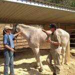 Santa Clarita Equestrian Facility