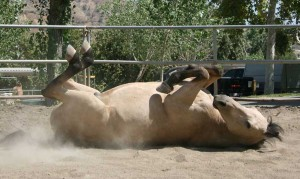 Horse daycare services santa clarita, CA