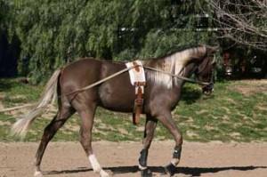 horse training hunter jumper dressage santa clarita california